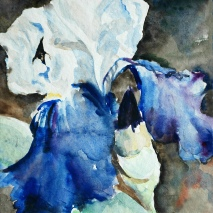 blue iris, watercolour