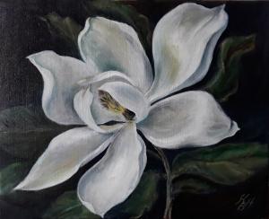 fleur de magnolia d'un jardin secret jardin