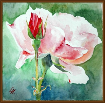 pink rose, watercolour