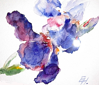 purple iris, watercolour