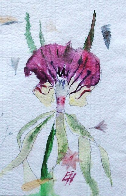 orchid, watercolour