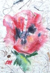 poppy, watercolour