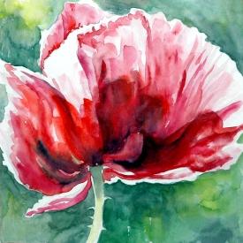 poppy in red, watercolour