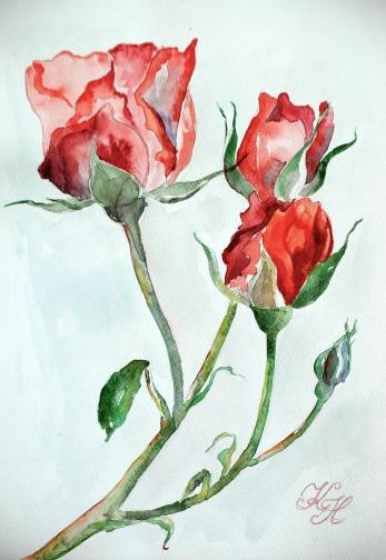 roses, watercolour
