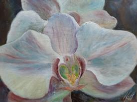 fleurs d'orchidée blanche, huile sur toile, 30 x 40 cm